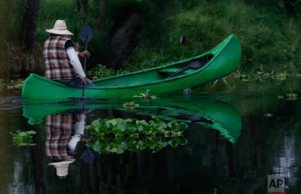 "In this July 13, 2017 photo, a farmer paddles his canoe to his floating farm known as a ""chinampa,"" in Xochimilco, Mexico City. (AP Photo/Marco Ugarte)"