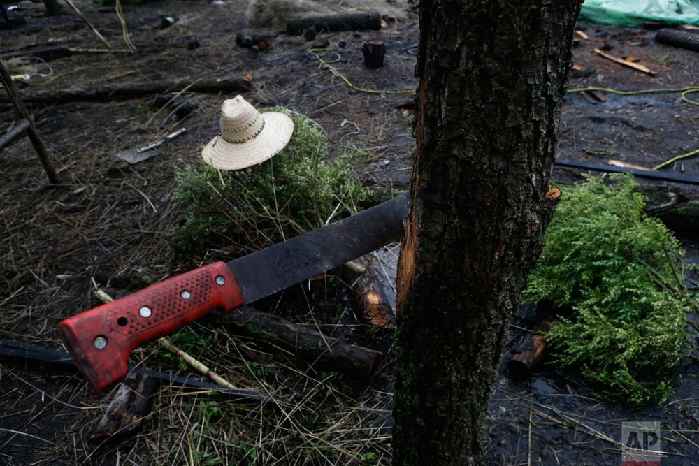 "In this July 13, 2017 photo, a farmer's machete and hat sit on a floating farm known as a ""chinampa"" in Xochimilco, Mexico City. (AP Photo/Marco Ugarte)"