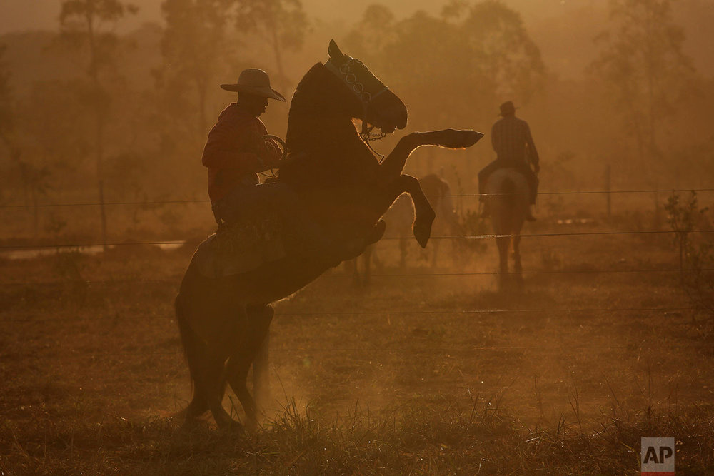 In this July 22, 2017 photo, a cowboy rears up his horse before the ascent to the Serra da Boa Vista, during the Ox Cart Festival in Vazante, Minas Gerais state, Brazil. Farmers in the region use the corn harvest period in July to revive the tradition of traveling hundreds of miles in their ox carts. (AP Photo/Eraldo Peres)