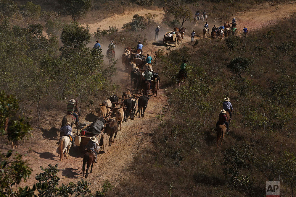 In this July 21, 2017 photo, ox carts trundle to the Serra da Boa Vista, during the Ox Cart Festival in Vazante, Minas Gerais state, Brazil. Most carts are pulled by a team of 12 oxen, with 86 ox carts participating in this year's festival. (AP Photo/Eraldo Peres)