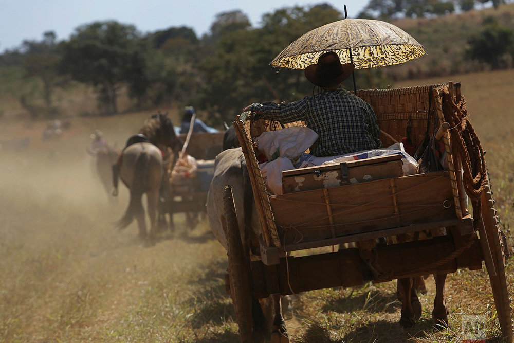 In this July 22, 2017 photo, a cowboy takes cover from the sun under an umbrella as he drives his ox cart through the Serra da Boa Vista, during the Ox Cart Festival inVazante, Minas Gerais state, Brazil. Farmers in the region use the corn harvest period in July to revive the tradition of traveling hundreds of miles in their ox carts. (AP Photo/Eraldo Peres)