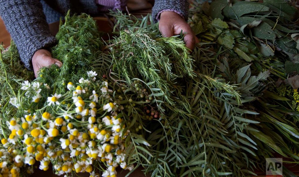 "In this July 20, 2017 photo, midwife Ana Choque selects medicinal herbs to take to one of her pregnant patients for prenatal care in El Alto, Bolivia. The herbs are, from left: camomile, rosemary, ""molle"" a kind of pepper, ""artemisia"" or sagebrush, and ""chacataya."" (AP Photo/Juan Karita)"