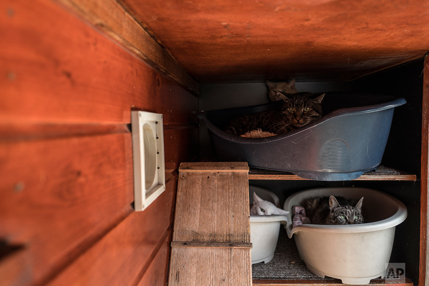In this Wednesday, Aug. 2, 2017 photo, a group of cats sits in baskets on the Catboat shelter in Amsterdam, Netherlands. (AP Photo/Muhammed Muheisen)