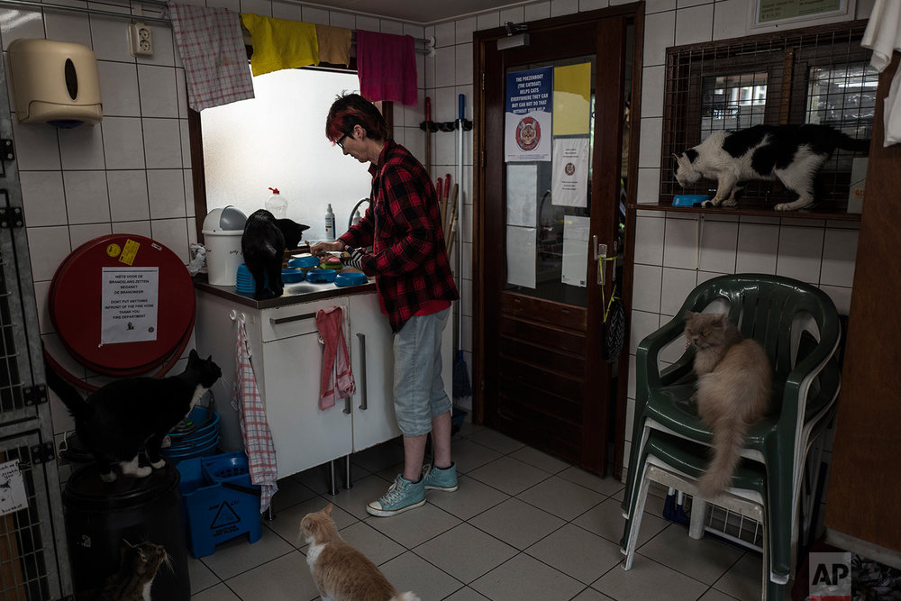 In this Wednesday, Aug. 2, 2017 photo, Judith Gobets, the shelter's manager, prepares food for the cats on the Catboat shelter in Amsterdam, Netherlands. (AP Photo/Muhammed Muheisen)