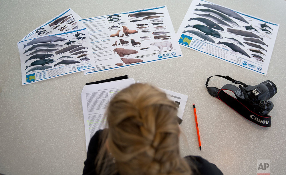 """Researcher Tiina Jaaskelainen looks over information sheets on marine mammals of the North Pacific and Arctic aboard the Finnish icebreaker MSV Nordica as it sails the North Pacific Ocean to traverse the Northwest Passage through the Canadian Arctic Archipelago Saturday, July 8, 2017. """"If we continue losing ice, we're going to lose species with it,"""" said Paula von Weller, a field biologist who was on the trip. (AP Photo/David Goldman)"""