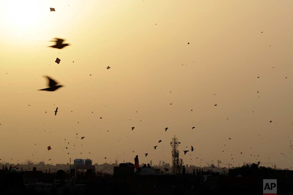 In this Tuesday, Aug. 15, 2017 photo, birds fly among kites on Independence Day in the old quarters of New Delhi, India. (AP Photo/Tsering Topgyal)