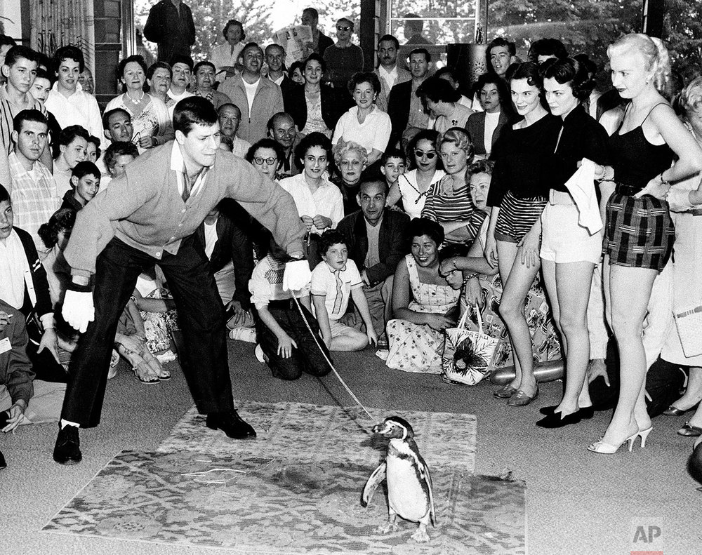 Actor-comedian Jerry Lewis and Wilbur the Penguin perform for an audience at Brown's Hotel in Sheldrake, N.Y., in June 1955. The three Fred Astaire dance hostesses standing nearby are Laurie Cabot, far right, and the Borrowes twins. (AP Photo/Irving Desfor)