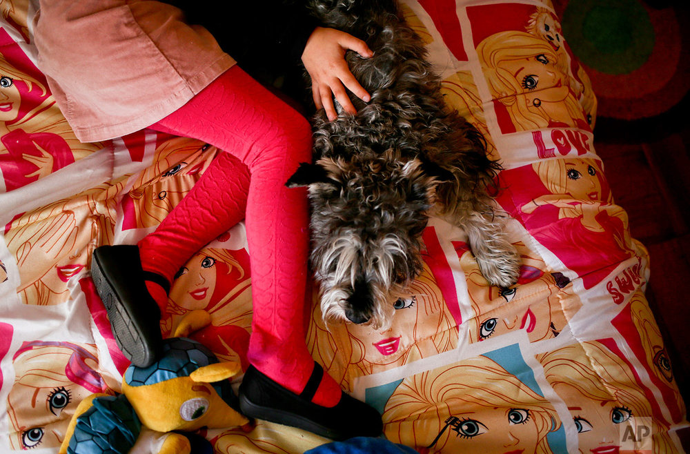 In this July 18, 2017 photo, transgender girl Luna plays with her dog Stark on her Barbie-themed bedspread at her home in Santiago, Chile. Last year a judge ordered officials at the civil registry to change the child's name and gender on her birth certificate, a landmark decision and a first for someone so young in Chile. (AP Photo/Esteban Felix)