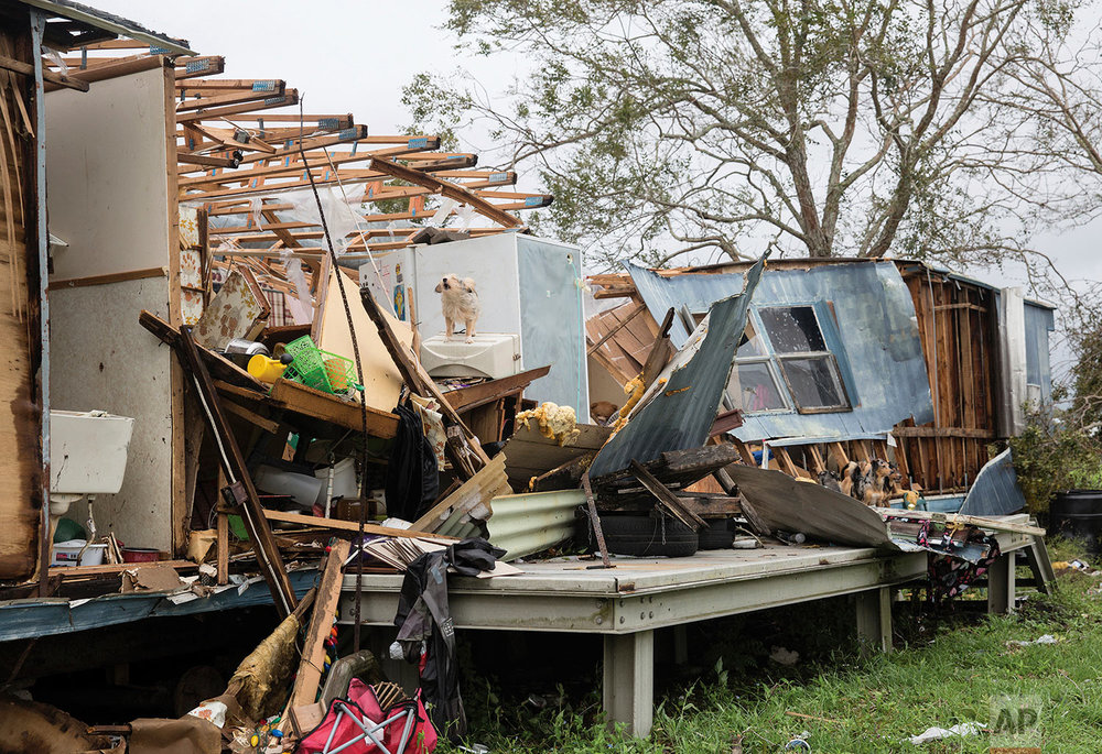 A dog balances on an appliance of a destroyed mobile home in Tivoli, Texas Sunday, Aug. 27, 2017 after the area was destroyed by Hurricane Harvey.  (The Victoria Advocate via AP)