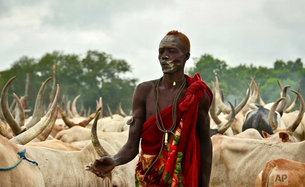 "In this photo taken Monday, July 31, 2017, a young South Sudanese man tends to his herd of cattle at a camp outside the town of Rumbek, South Sudan. Cows are used for payments and dowries, which Human Rights Watch calls a ""key driver of child marriage"" as families see daughters as a source of wealth. (AP Photo/Mariah Quesada)"