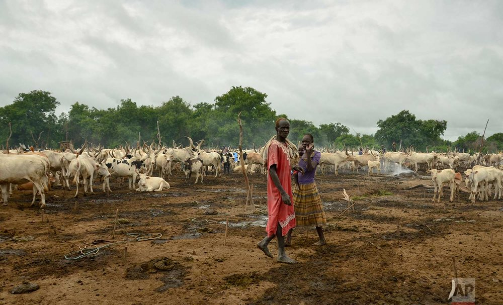 In this photo taken Monday, July 31, 2017, cattle keepers walk past their herd at a camp outside the town of Rumbek, South Sudan. (AP Photo/Mariah Quesada)