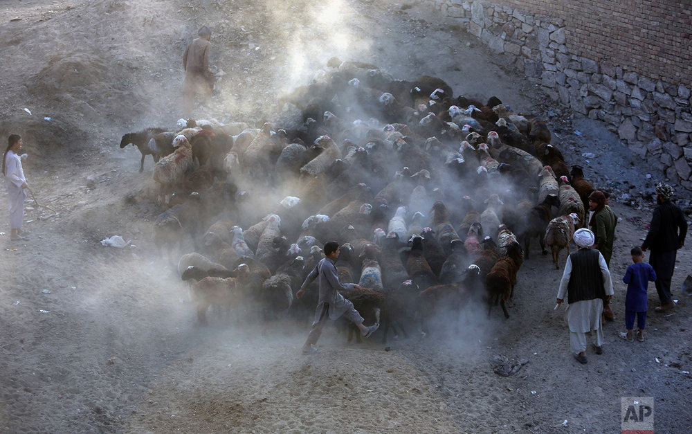 Afghanistan Eid al Adha