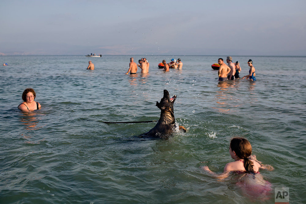 A dog joins swimmers participate in the annual Sea of Galilee swim, the oldest and largest popular swimming event, near Tiberias, northern Israel, Saturday, Sept. 16, 2017. (AP Photo/Oded Balilty)