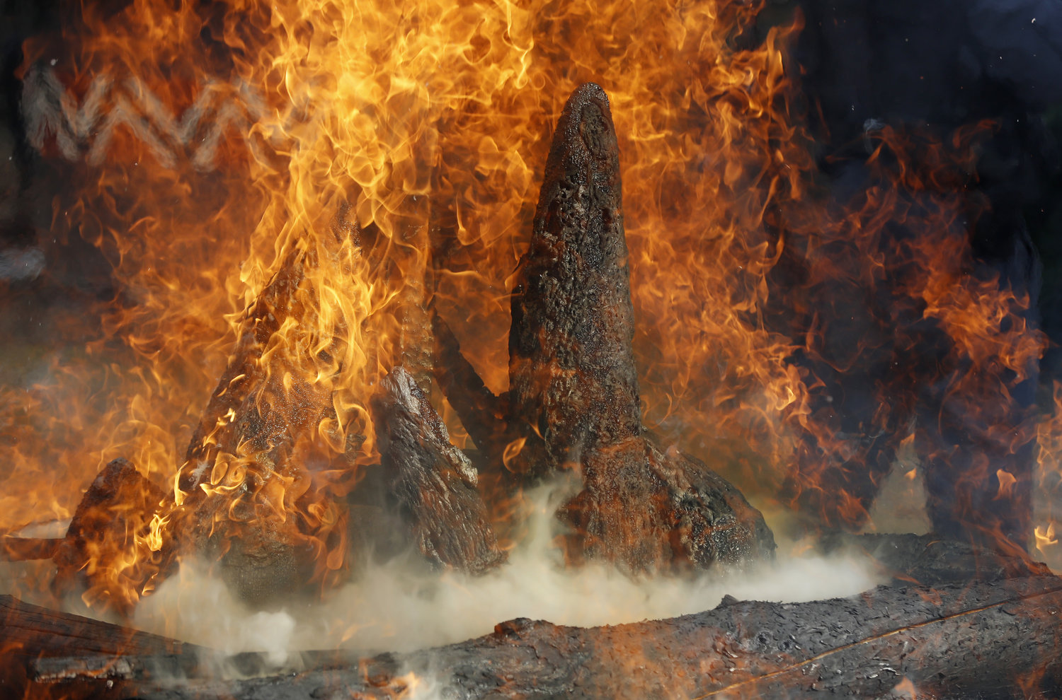 Czech Republic Rhino Horns Burning