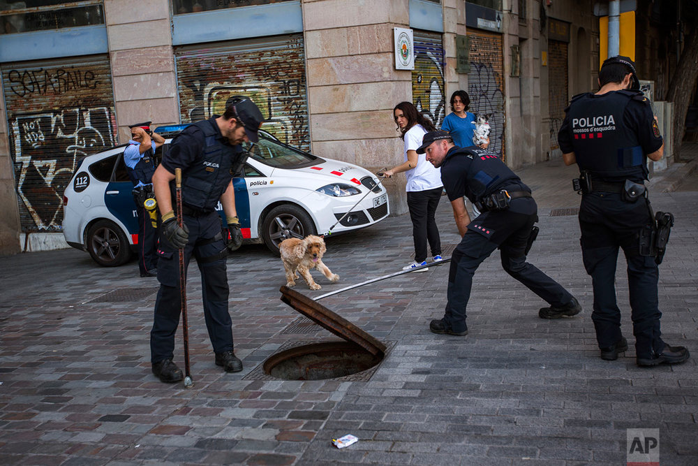 In this Sunday, Sept. 10, 2017 photo, police officers of Catalan Mossos d'Esquadra inspect a sewer looking for possible explosives ahead of the Catalan National Day in Barcelona. (AP Photo/Emilio Morenatti)