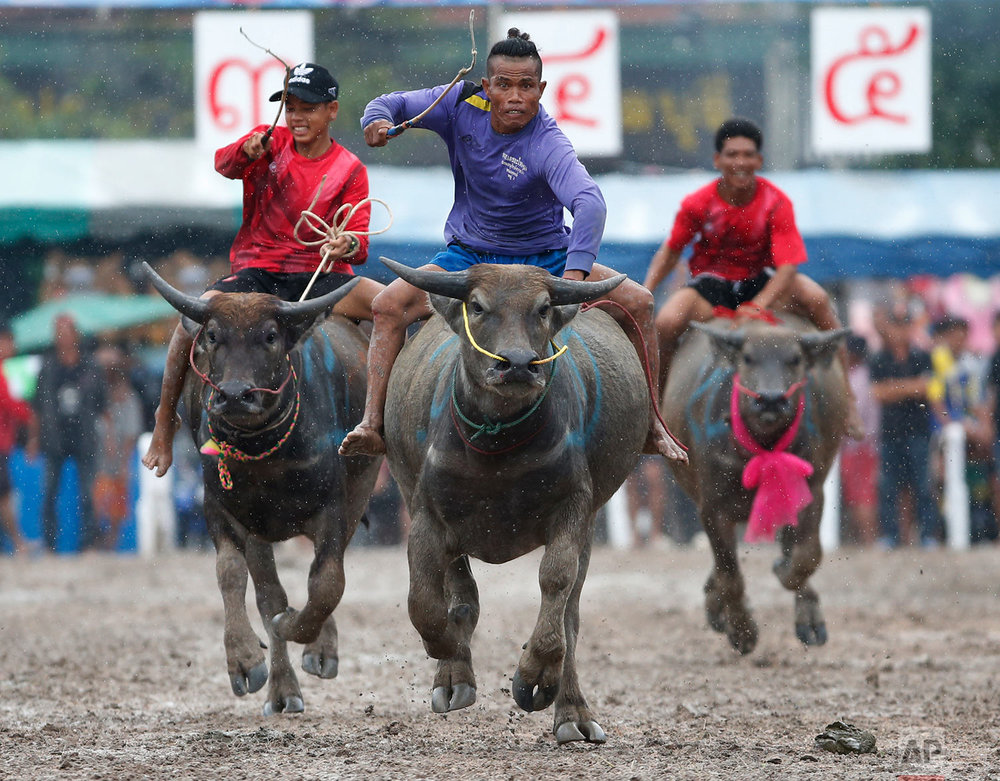 Thailand Water Buffalo Race