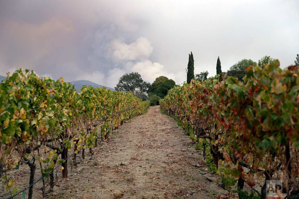 Vineyards line up under a mountain engulfed by a wildfire, Monday, Oct. 9, 2017, in Napa, Calif. (AP Photo/Marcio Jose Sanchez)