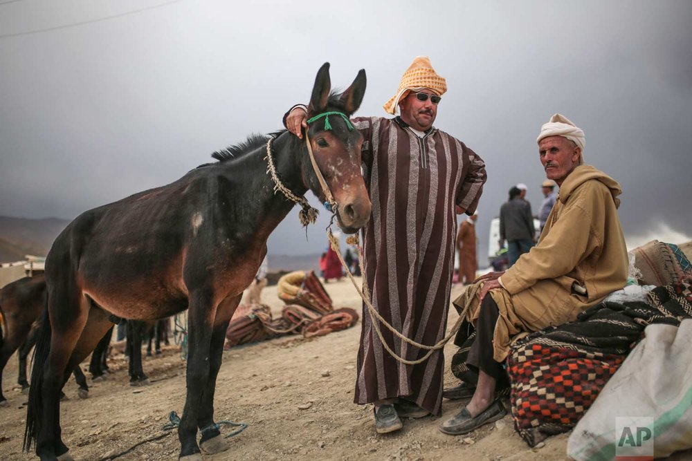 In this Friday, Sept. 22, 2017 photo, Berber merchants wait for customers at a cattle market during the annual festival of Imilchil, in Morocco's Atlas mountains. (AP Photo/Mosa'ab Elshamy)