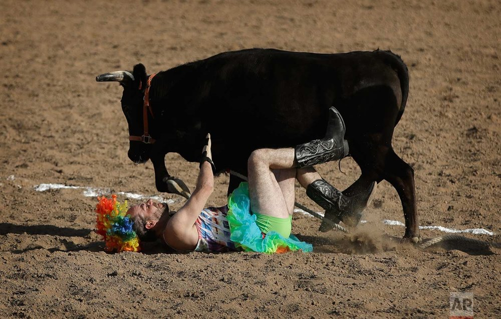 In this Sept. 23, 2017, photo, Chris Tobin is thrown from a steer during the wild drag race event at the Bighorn Rodeo in Las Vegas. (AP Photo/John Locher)