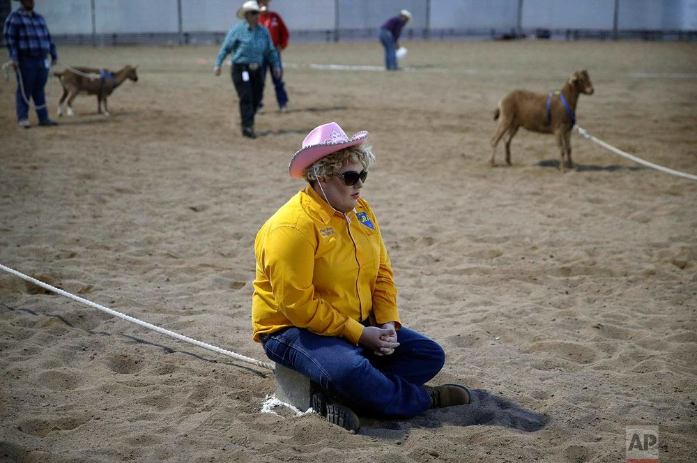 In this Sept. 24, 2017, photo, Phat Patty CarMichael, Miss Nevada Gay Rodeo 2017, sits on a brick to keep a goat in place during the goat dressing event at the Bighorn Rodeo in Las Vegas. (AP Photo/John Locher)