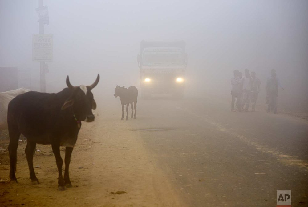 Cows stand by the side of a road as a truck drives with lights on through smog in Greater Noida, near New Delhi, India, Wednesday, Nov. 8, 2017. (AP Photo/R S Iyer)