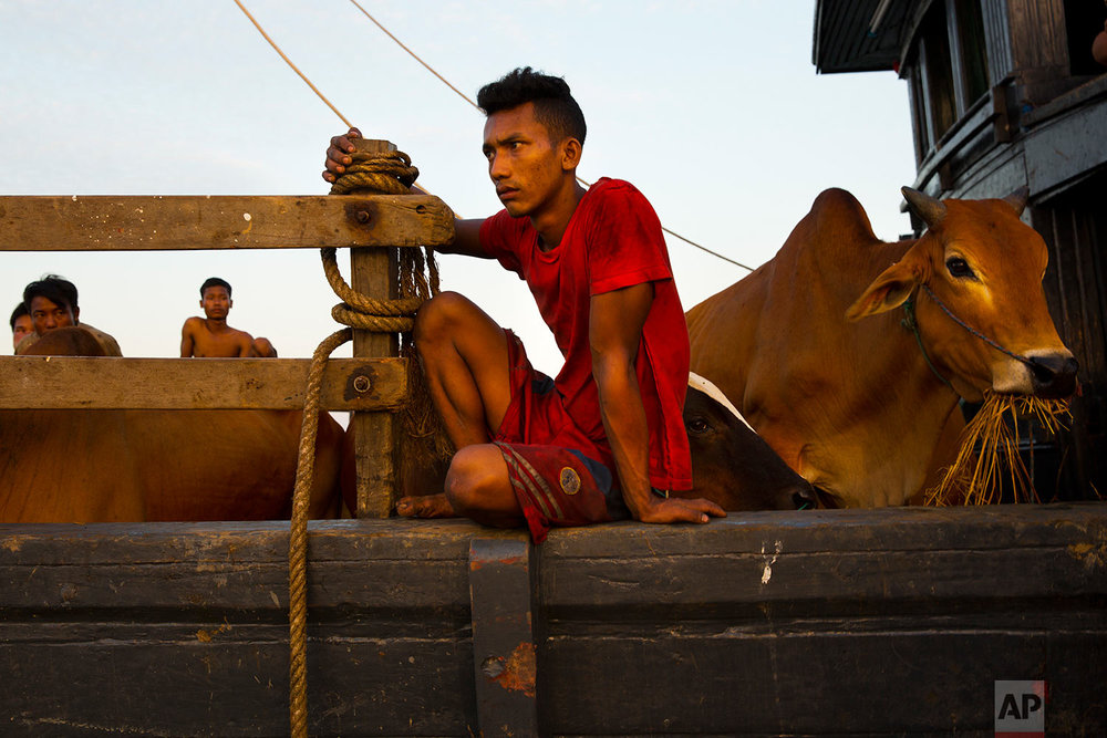 In this Nov. 4, 2017, photo, a Myanmar cattle trader watches Rohingya Muslims swimming with the help of plastic drums across the Naf river and into Bangladesh at Shah Porir Dwip dock. (AP Photo/Bernat Armangue)