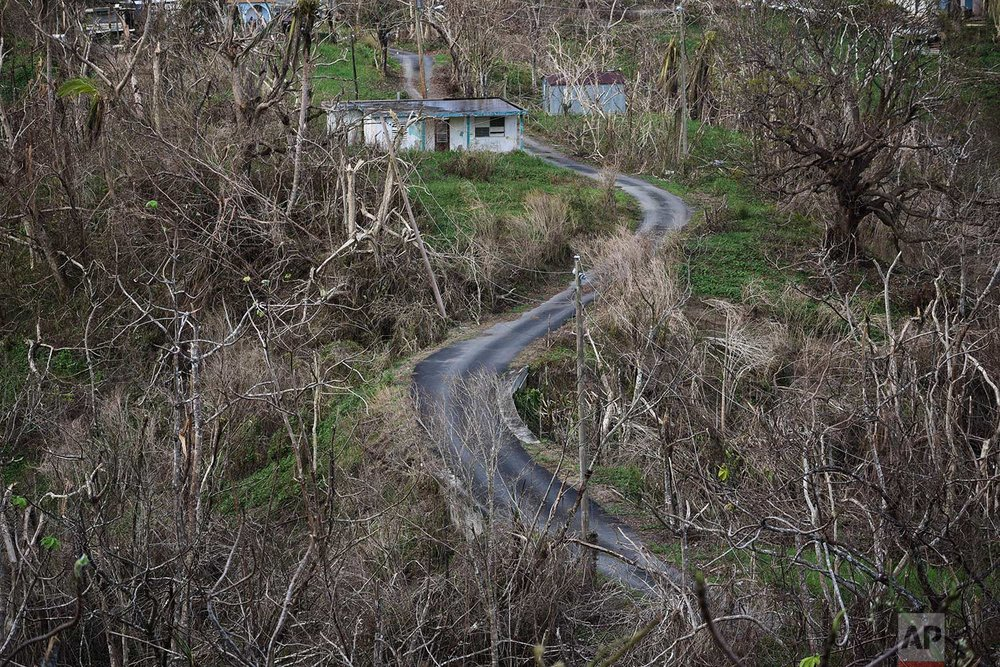 Trees stand barren in the aftermath of Hurricane Maria along a road in Montones Cuatro in the Piedrazul sector of Las Piedras, Puerto Rico, Monday, Oct. 2, 2017. (AP Photo/Carlos Giusti)