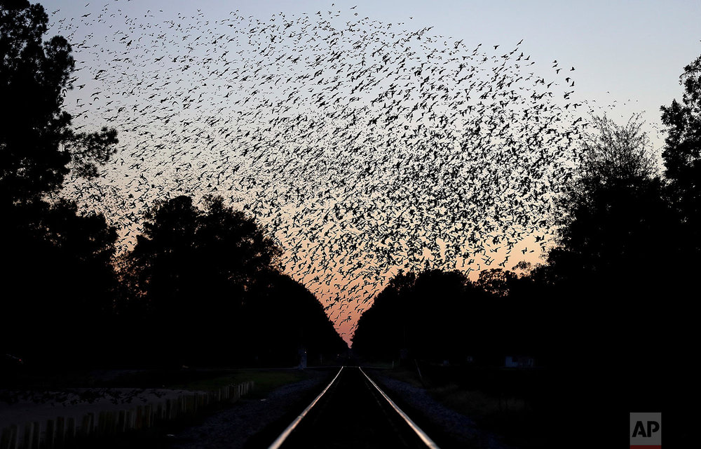 """A murmuration of birds fly over train tracks running through Rowland, N.C., Monday, Oct. 30, 2017. In Rowland, reminders of a darker time remain. Railroad tracks separate two sides of town, and people still refer to them as """"the white folks' section"""" and """"the black folks' section."""" And despite the halting road to progress, black people here are still twice as likely to be poor as whites. (AP Photo/David Goldman)"""
