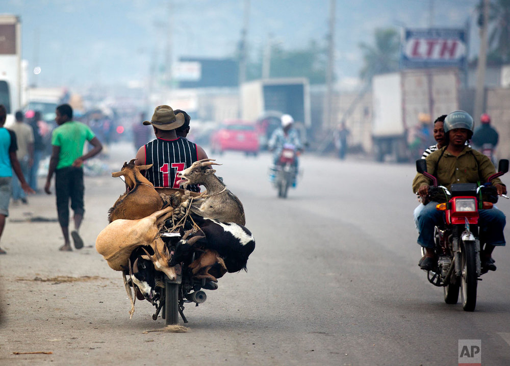 A moto-taxi driver transports a La Saline slaughterhouse customer and his newly acquired goats, in Port-au-Prince, Haiti, Thursday, Nov. 9, 2017. La Saline slaughterhouse is an essential part of the economy of the Haitian capital, supplying meat to restaurants, street vendors and stores. (AP Photo/Dieu Nalio Chery)