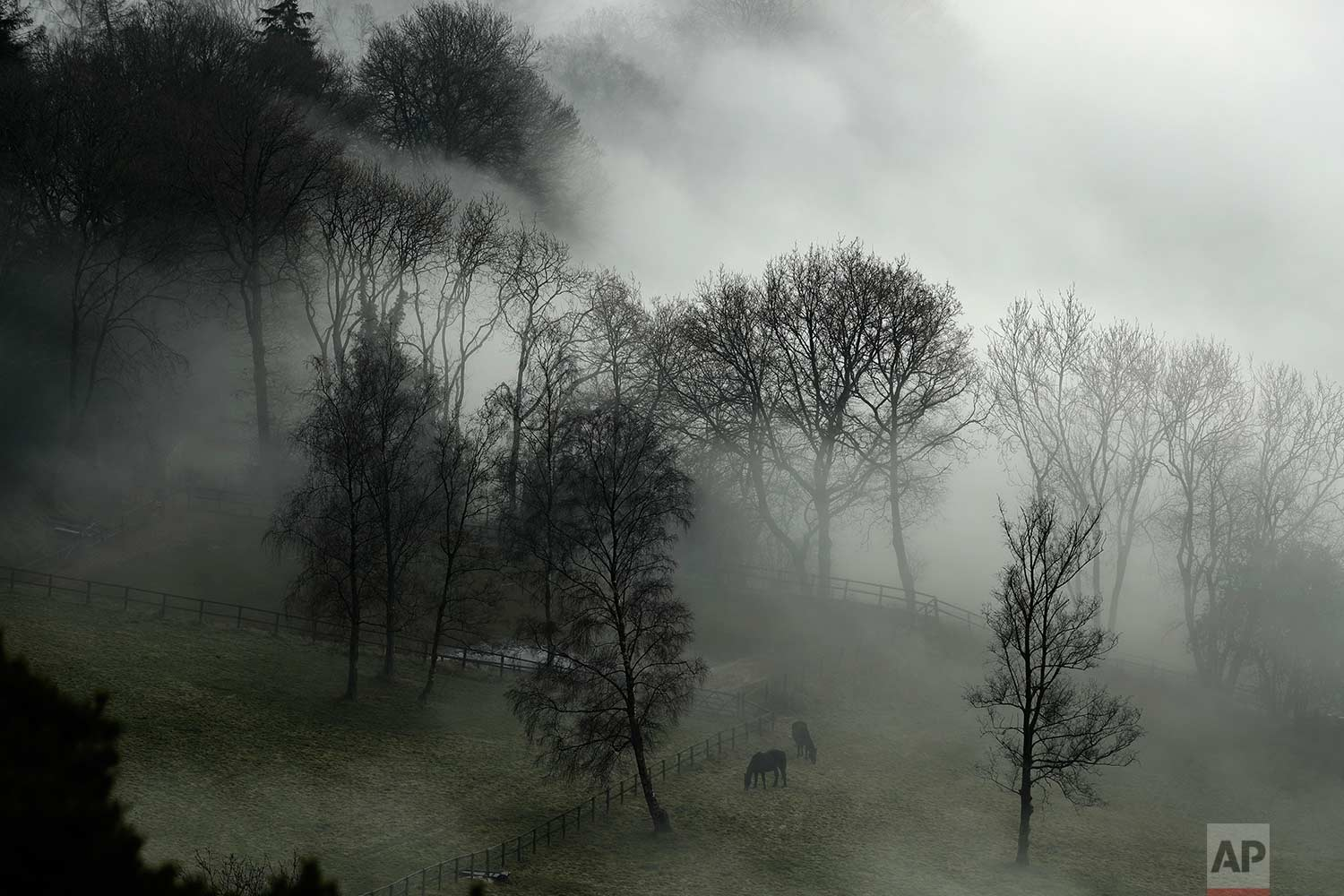 In this Monday, Jan. 23, 2017 photo, horses graze in a paddock with fog enveloping the trees behind them, as seen from Leith Hill in Surrey, south west of London. Thick fog has caused numerous flight delays and cancellations at London Heathrow and other area airports. The Met Office issued a severe weather warning for London and most of southern England as driving conditions were also hazardous and slippery. (AP Photo/Matt Dunham)