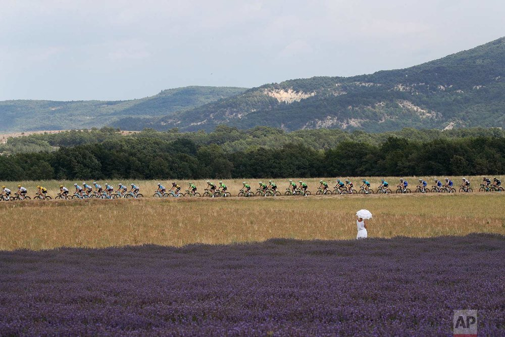 In this Friday, July 21, 2017 photo, a woman with an umbrella stands next to a lavender field as she watches the riders pass during the nineteenth stage of the Tour de France cycling race over 222.5 kilometers (138.3 miles) with start in Embrun and finish in Salon-de-Provence, France. (AP Photo/Christophe Ena)