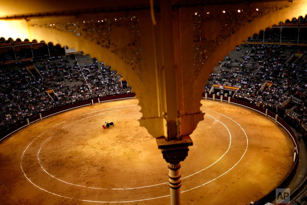In this Tuesday, May 16, 2017 photo, Spanish bullfighter Roman Collado performs with a Lagunajanda ranch fighting bull during a bullfight at the Las Ventas bullring in Madrid, Spain. (AP Photo/Francisco Seco)