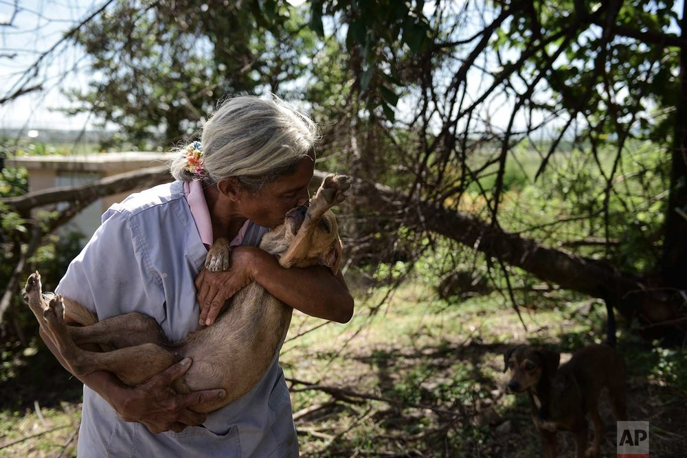 In this Friday, Dec. 15, 2017 photo, Carmen Cintron, founder of Canita Sanctuary that protects abandoned animals from being euthanized, nuzzles one of her rescue dogs in Guayama, Puerto Rico. (AP Photo/Carlos Giusti)