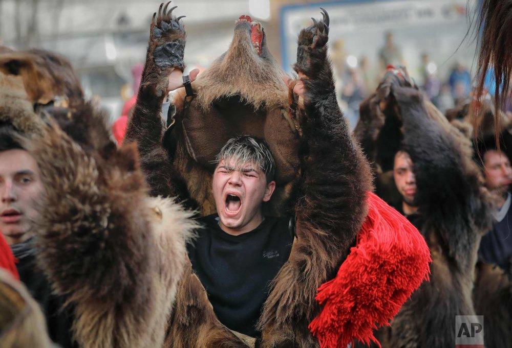 In this Saturday, Dec. 30, 2017, picture a man wearing a bear fur costume screams while dancing in Comanesti, Romania. (AP Photo/Vadim Ghirda)