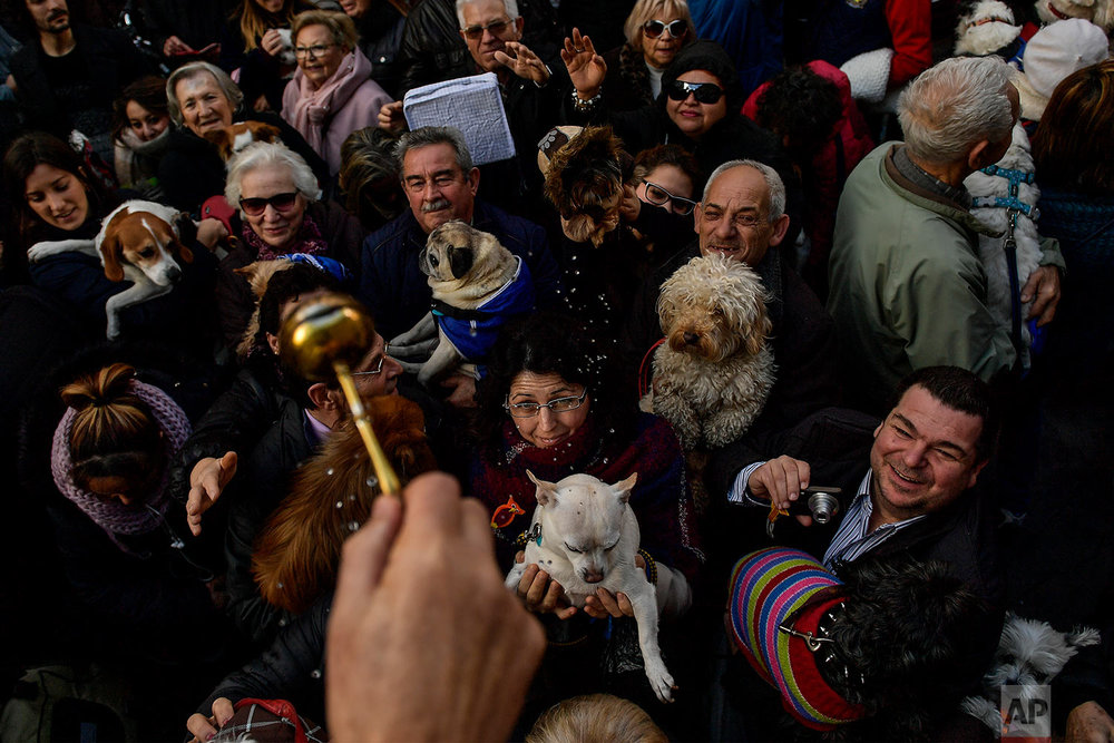 Spain Animals Blessing