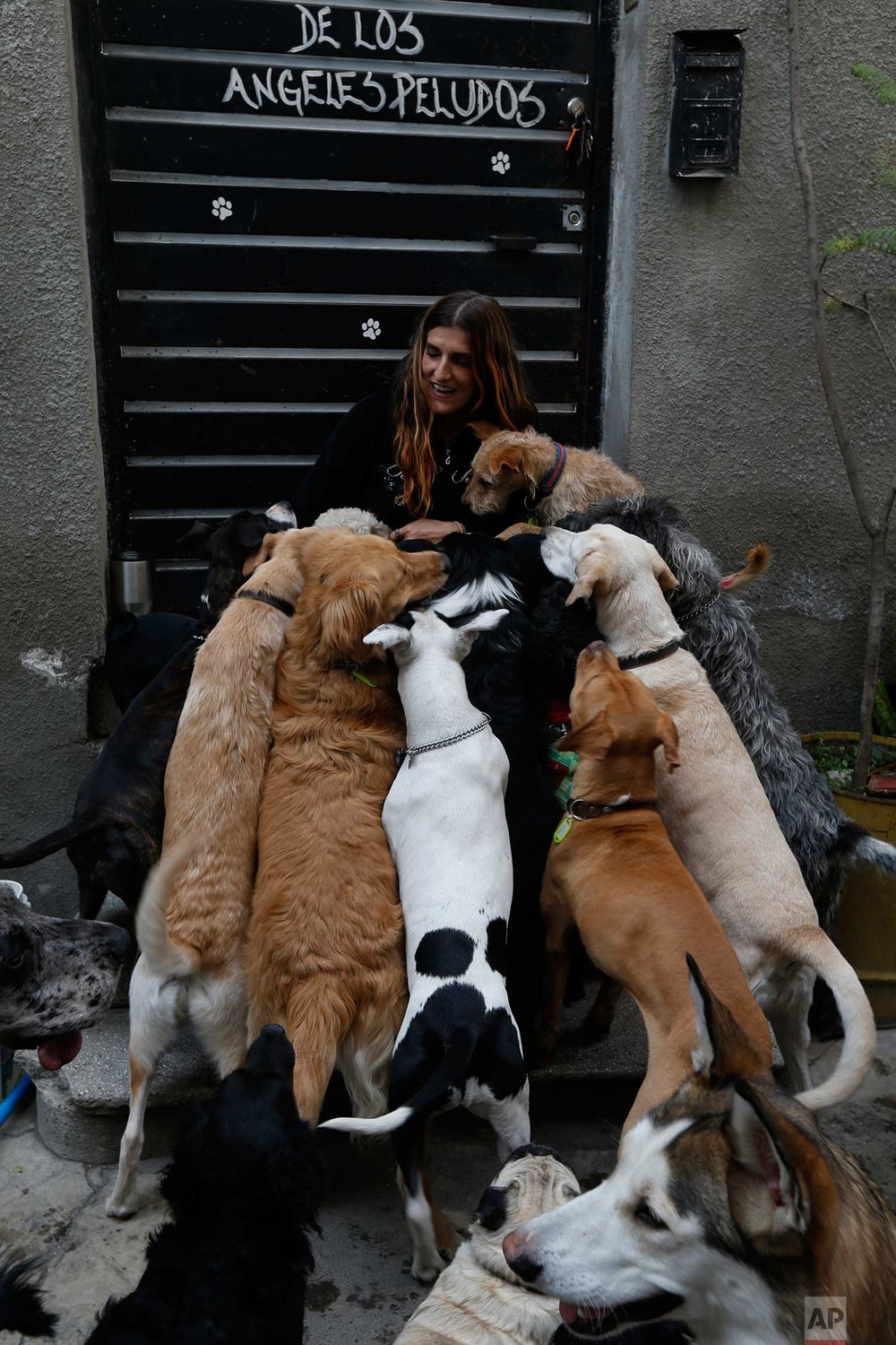 In this Saturday, Dec. 23, 2017, photo, Mariam Gutierrez de Velasco pets her dogs at their home in Mexico City. When the quake struck on Sept. 19, 2017, Mariam and her husband Jair Benavides who run a shelter had 54 dogs in their care. (AP Photo/Marco Ugarte)