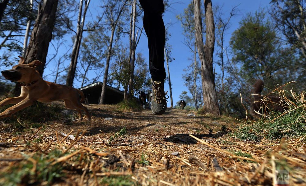 In this Wednesday, Dec. 27, 2017 photo, Jair Benavides runs with his dogs during a trip to Chapultepec forest in Mexico City. Jair and his wife Mariam Gutierrez de Velasco run the Can-geles shelter where they take care of dozens of dogs. (AP Photo/Marco Ugarte)