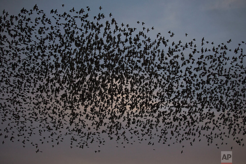 Israel Starling