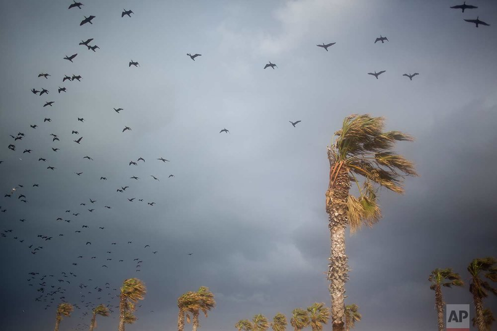 Birds fly over the old port of Cesarea, Israel, Friday, Jan. 19, 2018. Strong heavy winds, waves and rain whipped across Israel. (AP Photo/Ariel Schalit)