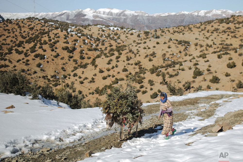 In this Wednesday, Feb. 14, 2018 photo, a woman walks home after collecting wood and tree leaves in Tighanmin, a Middle Atlas village near Azilal, central Morocco. (AP Photo/Mosa'ab Elshamy)