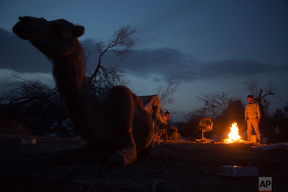 In this Friday, Feb. 9, 2018 photo, Beduin camels herders sit around fire at the night camp after herd all day in the open field at the territory of Israeli Kibbutz Kalya, near the Dead Sea in the West Bank. (AP Photo/Oded Balilty)