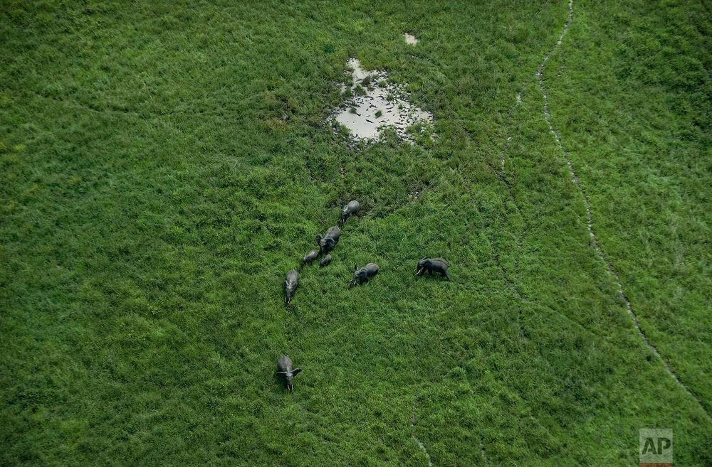 In this photo taken Tuesday, March 20, 2018, a small herd of elephants are seen from an airplane in Mikumi National Park, Tanzania. (AP Photo/Ben Curtis)