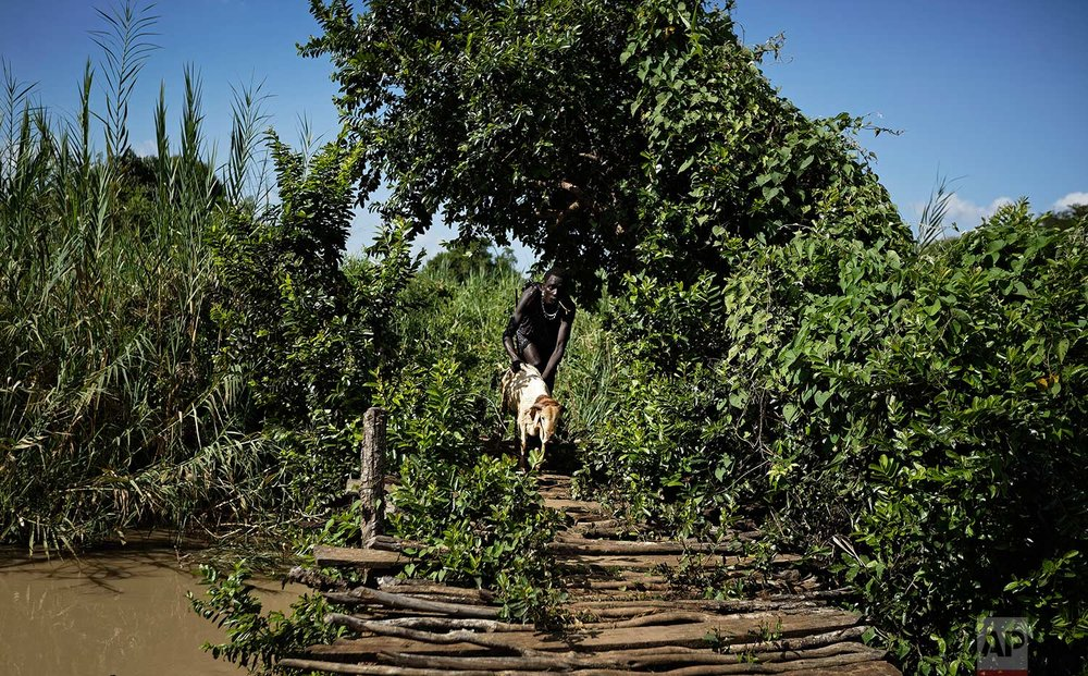 In this Thursday, March 22, 2018 photo, Maasai youth herder Adam Rajeta, 18, carries one of his sheep back across a rickety wooden bridge as he returns from grazing them, near Mikumi National Park in Tanzania. (AP Photo/Ben Curtis)