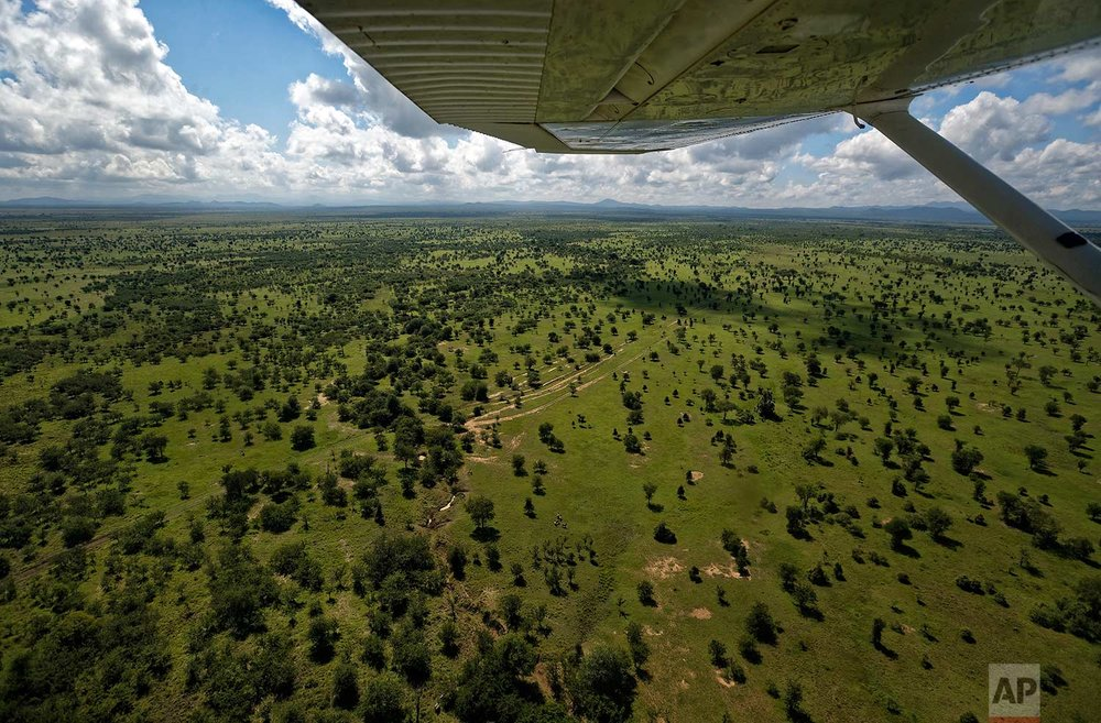 In this photo taken Saturday, March 24, 2018, wildlife rangers fly in a light airplane to spot elephants during an operation to attach GPS tracking collars to them, in Mikumi National Park, Tanzania. (AP Photo/Ben Curtis)