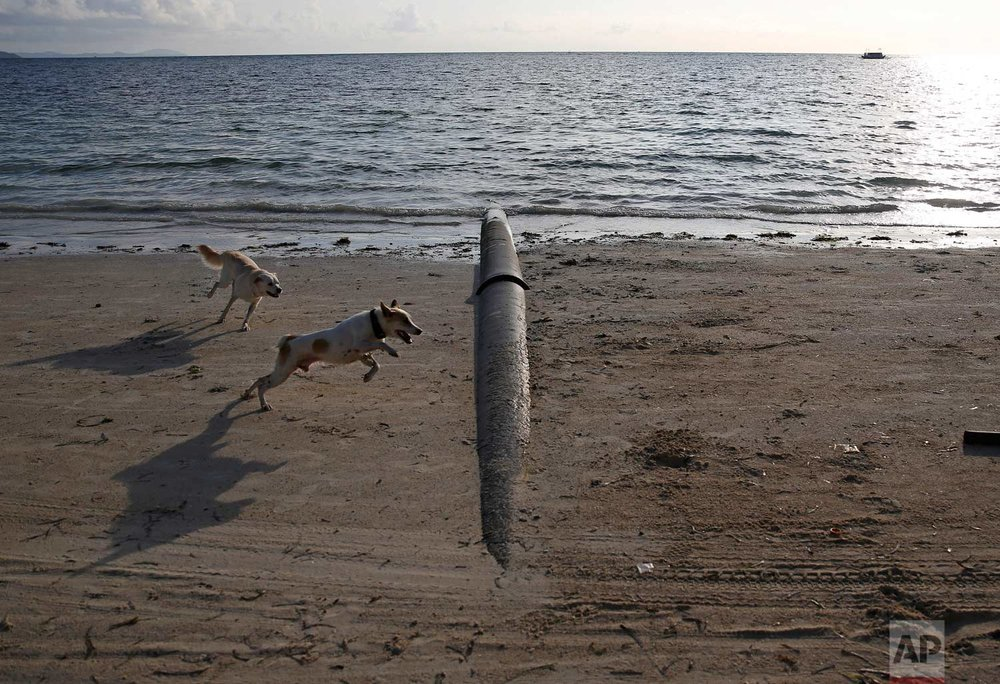"Dogs play beside a drainage pipe that discharges it's untreated sewage into the waters at the country's most famous beach resort island of Boracay, in central Aklan province, Philippines a day before the government implements it's temporary closure on Wednesday, April 25, 2018. Thousands of workers will be affected when Boracay will be closed after Philippine President Rodrigo Duterte orders it's closure on April 26 for up to six months after saying the waters off it's famed white-sand beaches had become a ""cesspool"" due to overcrowding and development. (AP Photo/Aaron Favila)"