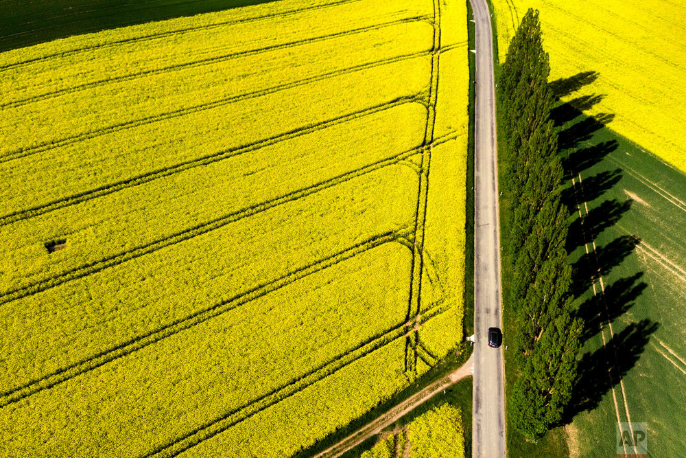 A car drives on the road next to poplars and rapeseed fields with bright-yellow flowers during a sunny and warm  spring day, in Daillens, Switzerland, Friday, April 27, 2018. (Laurent Gillieron/Keystone via AP)