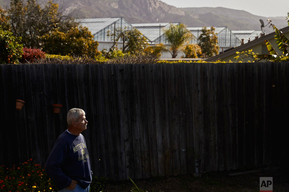 Xave Saragosa pauses for photos in his backyard as greenhouses growing cannabis plants are visible in the background, Thursday, April 12, 2018, in Carpinteria, Calif.  (AP Photo/Jae C. Hong)