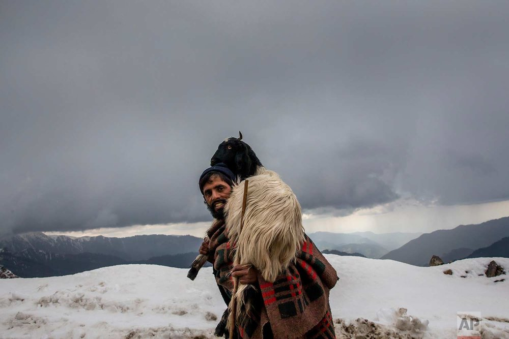 In this May 9, 2018, photo, Gul Khan, a Kashmiri nomadic Bakarwal man carries a tired goat on his shoulder as he leads a heard of sheep and goats at Peer Ki Gali, India, 80 kilometers (50 miles) south of Srinagar, Indian controlled Kashmir. (AP Photo/Dar Yasin)