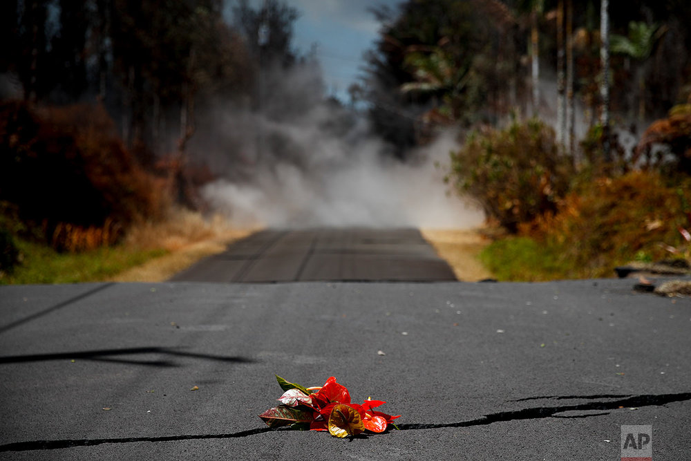 Flowers are placed on the road as a tribute to the Hawaiian volcano goddess Pele in the Leilani Estates subdivision near Pahoa, Hawaii, May 19, 2018. (AP Photo/Jae C. Hong)