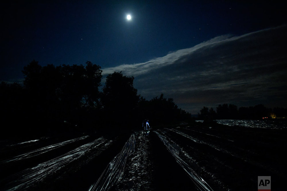 A temporary worker using a lantern, collects asparagus from the field in Caparroso, around 85 km (52 miles) from Pamplona, northern Spain on Thursday, May 31, 2018. (AP Photo/Alvaro Barrientos)